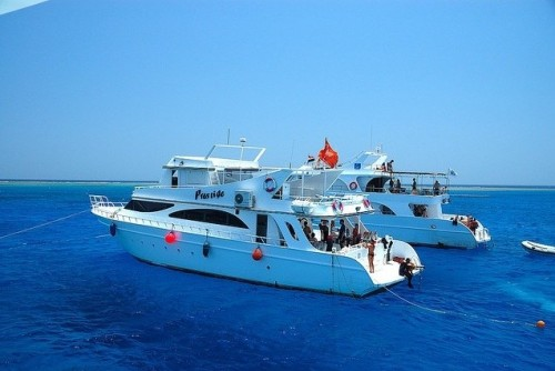 Snorkelling Trip To Dolphin House Hurghada